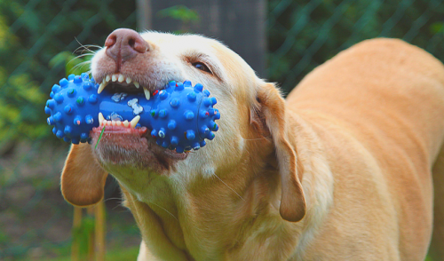 Fun, Cognitive Training Games for Dogs