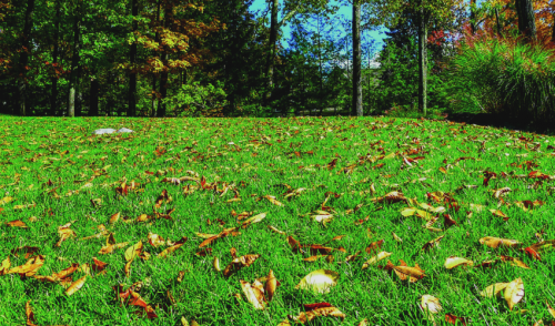 Don't Forget to Fertilize Your Lawn This Fall