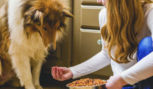 Is Your Puppy Ready for Adult Dog Food?