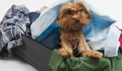 Holiday Travel Must-Haves With Pets