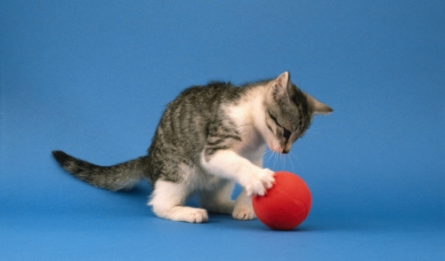 Indoor Games with Pets