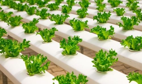 Caring for a Hydroponic Garden
