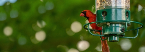 Wild Bird & Wildlife Feeds