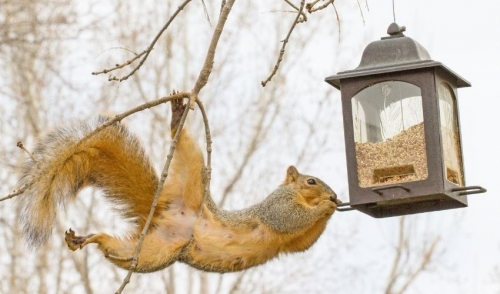 How to Keep Squirrels Out of the Yard and Garden