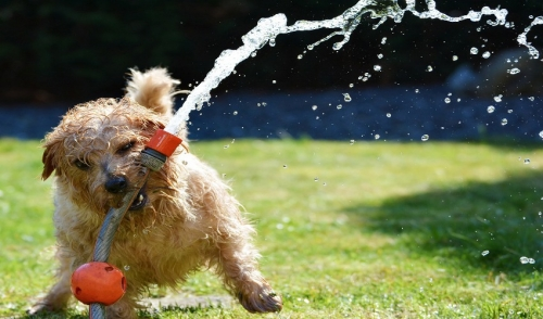 Summer Tips For Your Pet