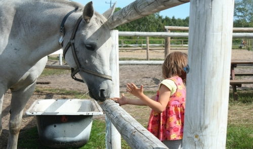 Choosing The Right Feed For Your Equine