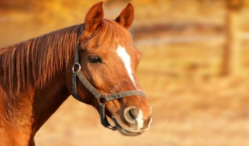 Why Vaccines Matter for Horse Health