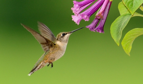 No Hummingbirds at Your Feeders? We Have Solutions!