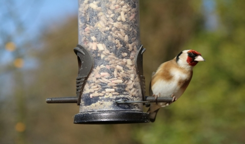 Spring Bird Feeding Tips