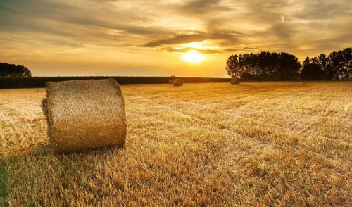 Growing, Harvesting and Baling Your Own Hay