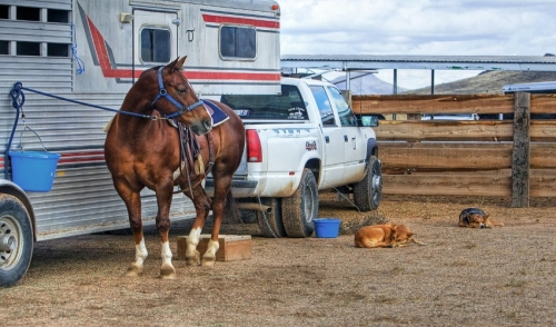 How to Solve Trailer Loading Issues with Your Horse
