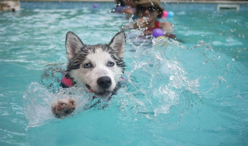 Is The Swimming Pool Safe For Your Pets?