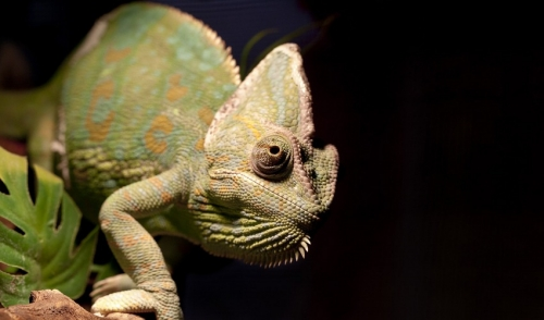 Helping Your Pet Reptile Through Climate Changes