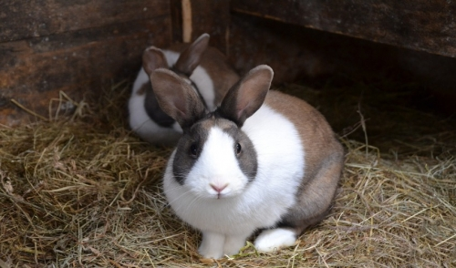 Preventing Your Rabbit From Over Heating