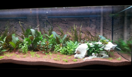 Which Aquarium Plants Should You Be Using?