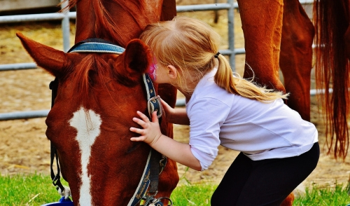 Earning the Love and Respect of Your Horse