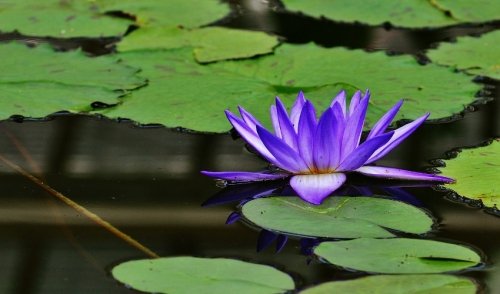 Tips for Adding Plants to Your Pond