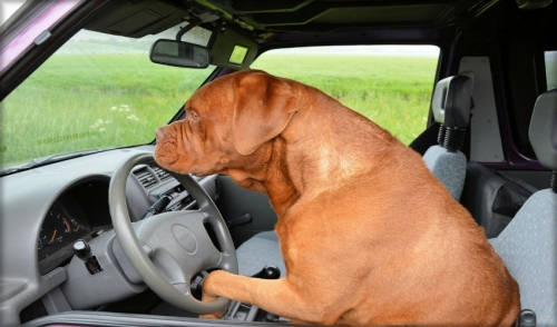 Tips for Traveling with Dogs in Cars