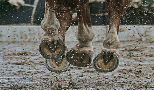 Caring for Your Horse's Hooves in Wet Conditions