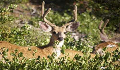Strategies and Tips for Hunting Whitetails