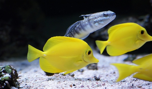 What You Need To Know About Saltwater Aquariums