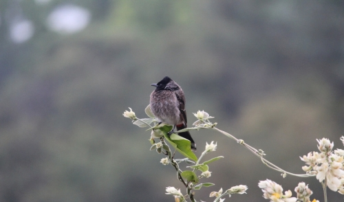 How to Use Flowers to Attract Different Types of Wild Birds