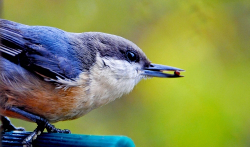 Safe Feeding Options for Wild Birds