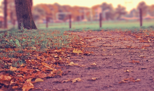 Raking Leaves: Bag or Mulch?