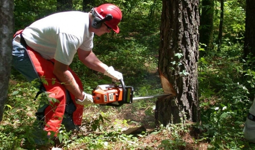 Operating A Chainsaw Safely
