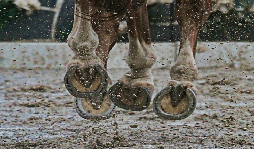Is It Time To Shoe Your Horse?