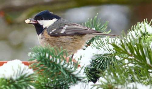 Do Your Best Birding in Winter