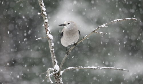 How Birds Survive Winter – And How We Can Help