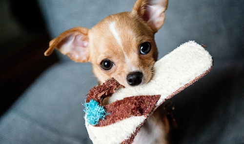 Soothing Your Teething Puppy