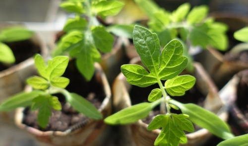 10 Best Tips for Starting Seeds Indoors