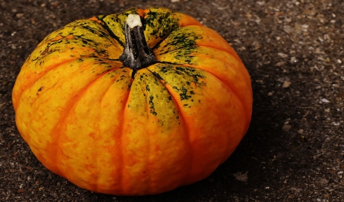 What to Do With Rotten Pumpkins