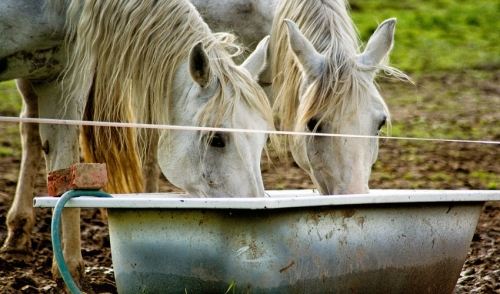 Supplying Your Horse with Water