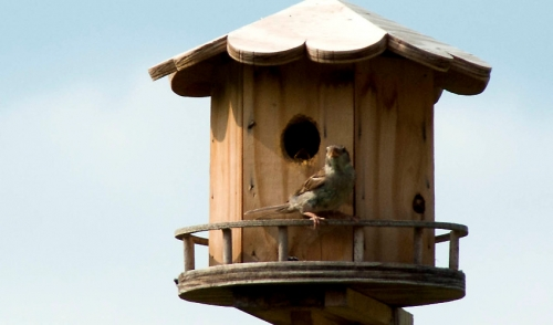 Squirrel Free Bird Feeding
