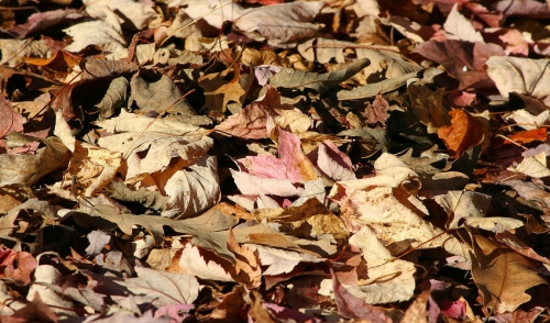Using Leaves for Mulch