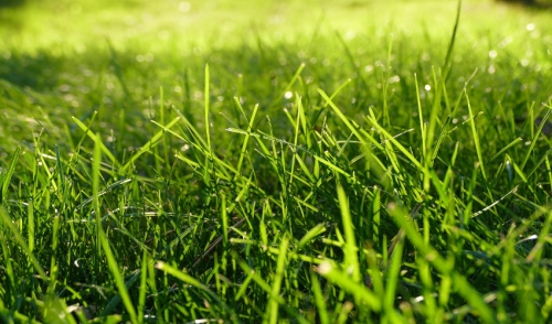 Caring For Your Newly Seeded Lawn