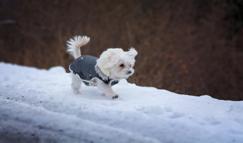 How to Get Your Pet to Use the Bathroom in Cold, Snowy Weather