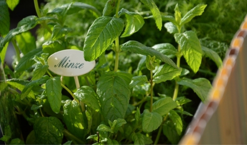 Tips for Success in Herb Gardening