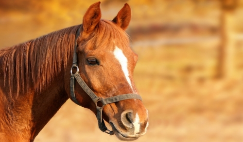 Protect Your Horse From Worms and Germs