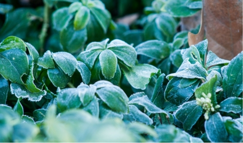 Preparing Your Garden For The Colder Months Ahead