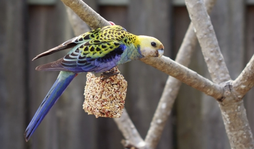 The Importance of a Healthy Diet for Your Bird
