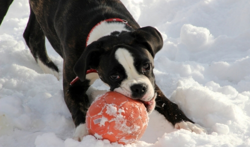 Winter Outdoor Games with Your Canine Friend