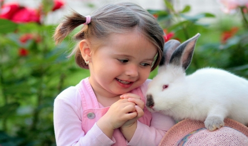 Why A Rabbit Is The Perfect Pet For The Family!