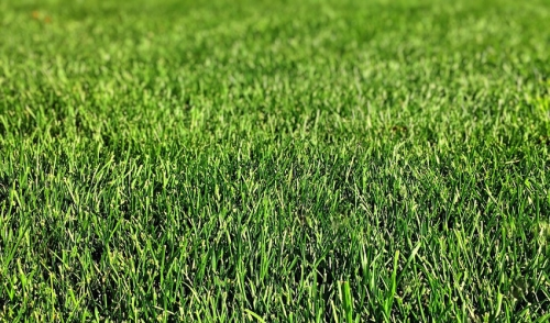 Liming Your Lawn