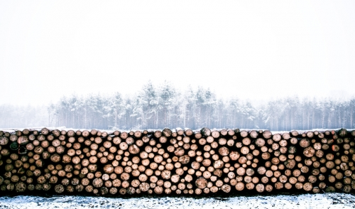 Firewood Storage in Winter