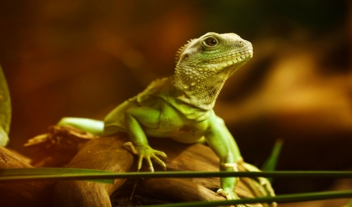 Reptile Health Checklist – Annual Reptile Home Health Exam
