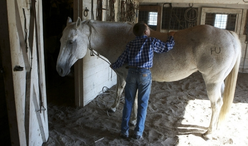 Grooming Tips: How to Shed Out Your Horse's Winter Coat